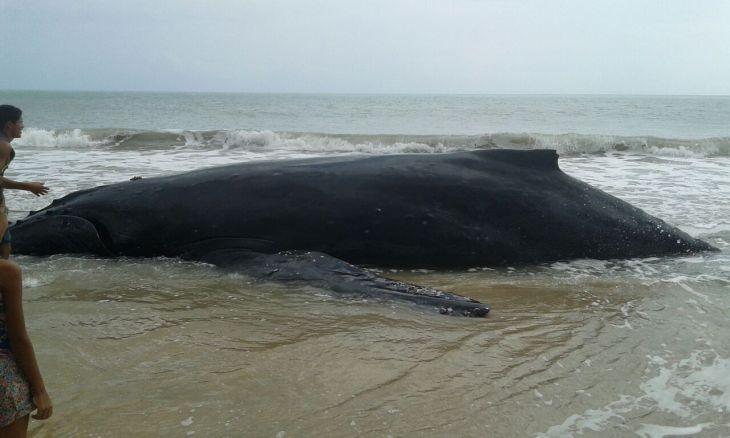 baleia tourinho 01