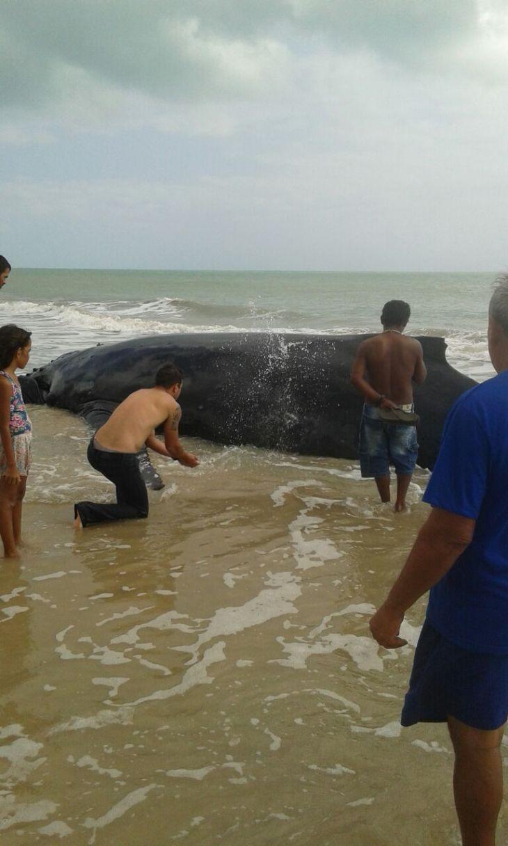 baleia tourinho 02