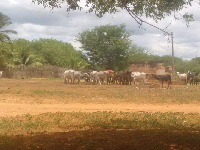 FEZES, INSETOS E INTERDIÇÃO: ANIMAIS CAUSAM TRANSTORNOS NA COMUNIDADE DO BAIXIO